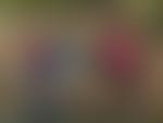 Blurred img 2241